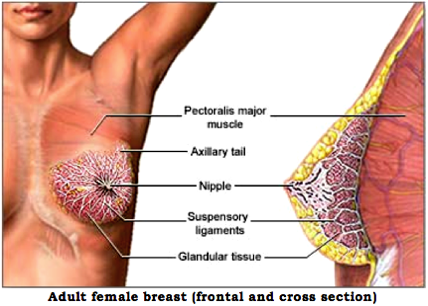 Breast Cancer—The Number Two Killer